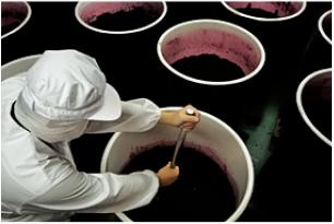 チアシード蒟蒻ゼリー〝発酵プラス〟