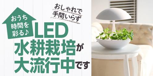 LED水耕栽培